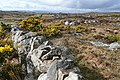 Doire an Fhéich (Derrynea) - geograph.org.uk - 1269492.jpg