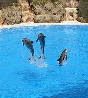 Dolphins at Loro Parque 08-crop.JPG