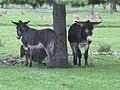 Donkeys (22342818604).jpg