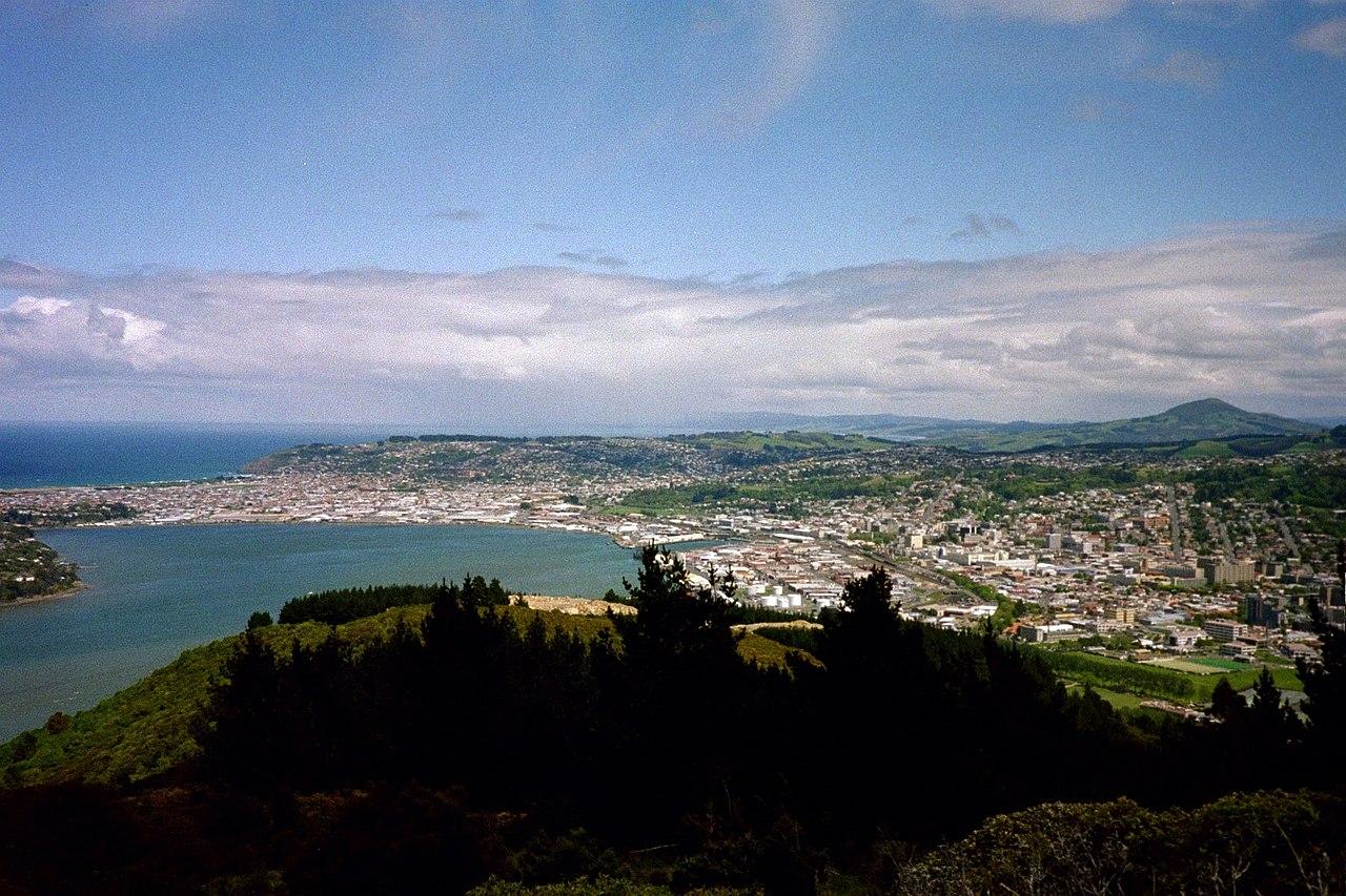 SEO Dunedin