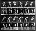 "E. Muybridge ""Animal locomotion"", plate Wellcome L0018589.jpg"