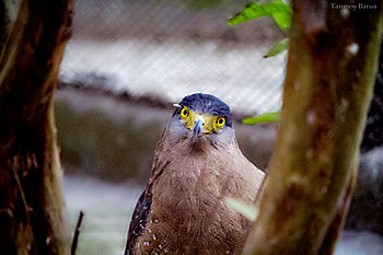 Eagle look.jpg