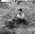 Een arbeider plant een jonge kokospalm in de palmentuin in Coronie, Bestanddeelnr 252-5664.jpg