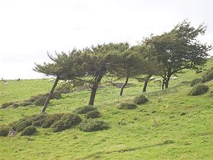 Effect of wind on trees. Walking around Hoad M...