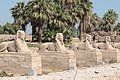 Egyptian sculpture on Avenue of Sphinxes (45765061544).jpg
