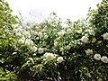 El Jardín De Eva (64151247).jpeg