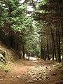 El nombre del mundo es Bosque - panoramio.jpg
