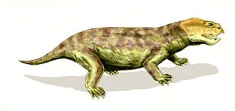 Dicynodont - Eodicynodon, a primitive dicynodont from the middle Permian of South Africa