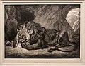 Eugène delacroix, leone sui monti dell'atlante, 1829, litografia.jpg