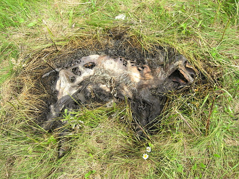 Effects Of Dogs Eating Charcoal