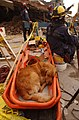 FEMA - 13121 - Photograph by Andrea Booher taken on 09-21-2001 in New York.jpg