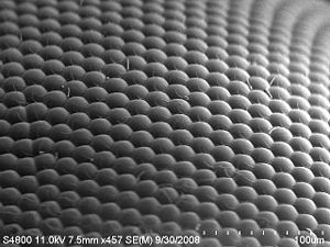 Eye - An image of a house fly compound eye surface by using scanning electron microscope