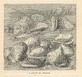 FMIB 43658 Group of Oysters.jpeg
