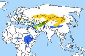 Range of the Saker Falcon.Yellow = breedingBlue = winteringGreen = all-year