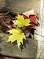 Fall (2919809285).jpg
