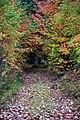 Fall at Seney National Wildlife Refuge (15393056846).jpg