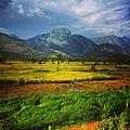 Farmland of Palghat.jpg