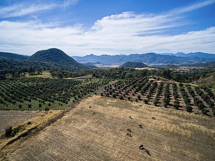 View of a sunny day near Mascota, Jalisco in January Farms near Mascota.jpg