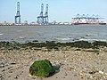 Felixstowe cranes from Shotley - geograph.org.uk - 1048284.jpg