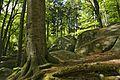 Felsenmeer Baum und Felsen.jpg