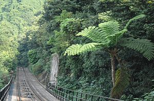Cyatheales - A lone tree fern next to the Peak Tram line on Hong Kong Island