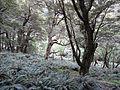 Fern clearning (6706370519).jpg