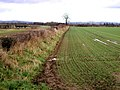 Field Edge - geograph.org.uk - 308566.jpg