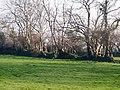 Field boundary, Llanteg - geograph.org.uk - 1291293.jpg