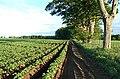 Field near Elie House - geograph.org.uk - 185898.jpg