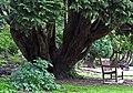 Fitz Park, Keswick. - panoramio.jpg