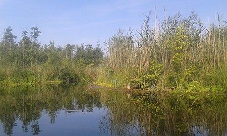 Fließ im Parsteiner See im Biosphärenreservat Schorfheide-Chorin.jpg