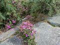 Flores del avila.jpg