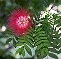 Flower 2a (3203675965).jpg