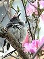Flower Lover (13023169995).jpg