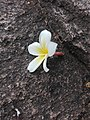 Flower bloom 19.3.jpg