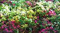 Flowers(278).jpg