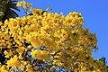 Flowers (6974312891).jpg
