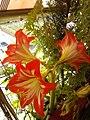 Flowers - Fiori (18161235200).jpg