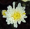 Flowers - Uncategorised Garden plants 235.JPG