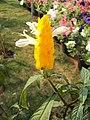Flowers - Uncategorised Garden plants 39.JPG