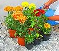 Flowers IMG 3510.jpg