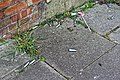 Fly-tipped cream chargers, Dongola Road, Tottenham, London 1.jpg