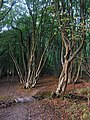 Footbridge, Bushycommon Wood - geograph.org.uk - 1530539.jpg