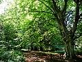 Footpath near Edge End - geograph.org.uk - 890957.jpg