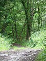 Footpath near Fingle's Bridge - geograph.org.uk - 1403378.jpg