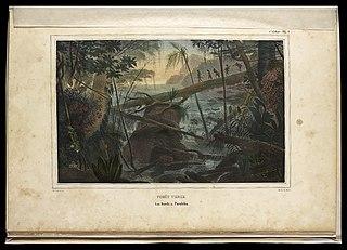 Forêt Vierge : Les Bords du Parahïba