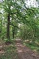 Forêt domaniale de Bois-d'Arcy 60.jpg