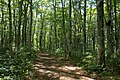 Forest in Mt.Bandai 12.jpg