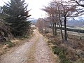 Forest road on the side of Little Conval - geograph.org.uk - 668993.jpg