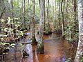 Forest swamp.jpg